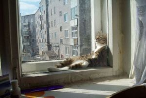 catinwindow